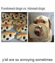 Annoyed Dog Meme - purebread dogs vs inbread dogs y all are so annoying sometimes