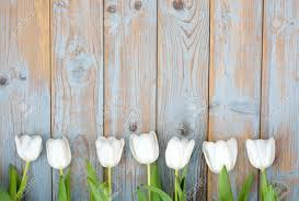 white tulips row bunch of white tulips on gray blue wooden shelves