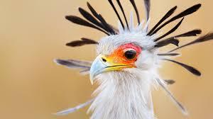 images of birds ahdzbook wp e journal
