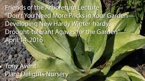developing new hardy winter hardy drought tolerant agaves for the