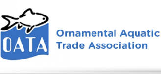 advert assistant to chief executive of oata practical