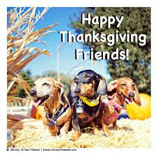 happy thanksgiving friends rufusontheweb