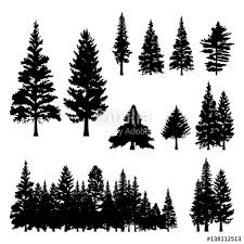 pine fir forest conifer coniferous tree silhouette stock image