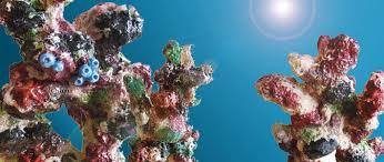 coral backrground rocks ornaments aquarium decor from aqua one