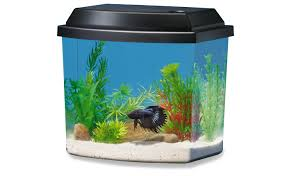 betta fish aquarium and tank decorations petsmart national