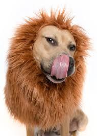 Large Dog Halloween Costume Ideas U0027teki 25 U0027den Fazla En Iyi Large Dog Costumes Fikri