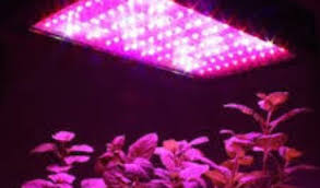 philips led grow light global led grow lights market share 2018 philips easy agricultural