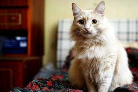 Bed Bugs On Cats Is Your Cat On The Bed Or Couch Here U0027s Why Catster