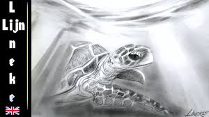 drawing a sea turtle under water graphite easy for beginners youtube