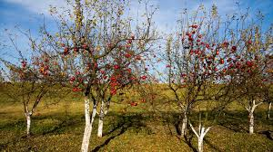 different types of trees how to choose suitable type