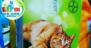 Obat Cacing Kucing Di Petshop dokter hewan sidoarjo docen pet service cara mengatasi dan