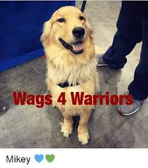 Mikey Meme - wags 4 warrio mikey meme on me me