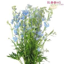 delphinium flowers wholesale delphinium delphinium flowers for diy weddings