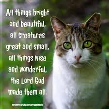 Jesus Cat Meme - christian inspirational images grover beach church of christ