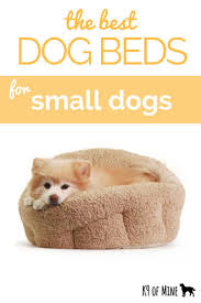 Best Dog Bed For Chewers 71 Best Canine Care Images On Pinterest