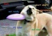 Doge Meme Pronunciation - fresh doge meme pronunciation kayak wallpaper