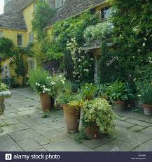 terracotta pots with ivy and plants on paving in front of yellow