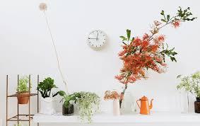 9 indoor plants that won u0027t die on you blog hipvan