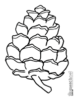 coloring page cone pine cone clipart worksheets