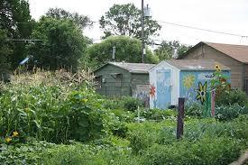 Urban Gardens Denver - inside denver urban gardens how you can get involved westword