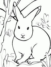 free printable arctic animals coloring pages coloring home