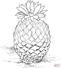 desert plants coloring pages free printable pictures