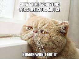 Sad Animal Memes - cat human won t eat mouse sad animal meme memes animals