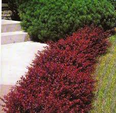 Small Shrubs For Front Yard - 272 best landscape images on pinterest gardening landscaping
