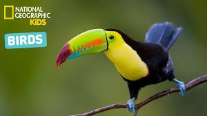 birds first grade lessons tes teach