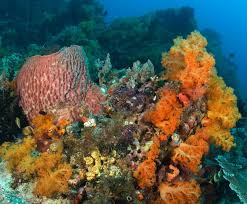 corals and coral reefs smithsonian ocean portal