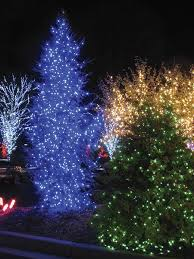 outdoor christmas lights for bushes 180 blue static led outdoor lights 18 mtrs extendable