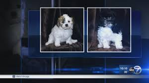 police release sketches of suspects in designer dog theft