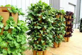 all about fall gardening greenstalk vertical garden