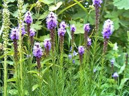 Low Maintenance Plants And Flowers - low maintenance perennial flowers