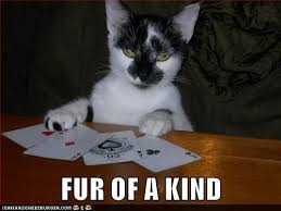 Poker Memes - lolcats poker lol at funny cat memes funny cat pictures with