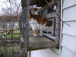 catio design outdoor enclouses ideas awesome home also stunning