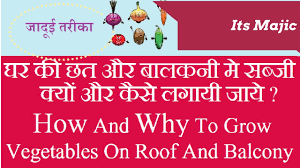 How To Grow Vegetables by How And Why To Grow Vegetables On Roof And Balcony Hindi Youtube
