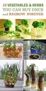 Diy Garden And Crafts - grow an indoor vegetable garden and enjoy your own fresh organic