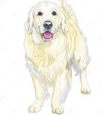 vector sketch yellow gun dog breed labrador retriever u2014 stock
