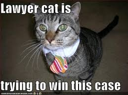 Lawyer Cat Meme - awww if i wasnt deathly allergic i would so get a cat just so i