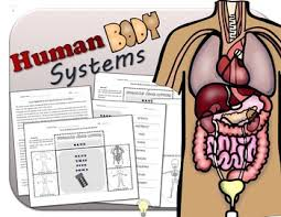 Anatomy Of Human Body Pdf Pdf Science Human Body Systems Foldables For Interactive Notebooks