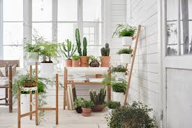 the best plant stands for every budget apartment therapy
