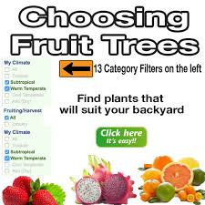 Tropical Fruit Tree Nursery - fruit trees plants australia daleys fruit tree nursery
