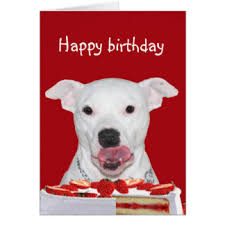american pitbull terrier merchandise bull terrier gifts on zazzle