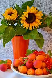 flowers and fruits free photo flowers fruit apricots fruit sunflower sweet
