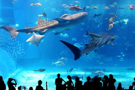 japanese aquarium recommended aquariums you should visit in japan