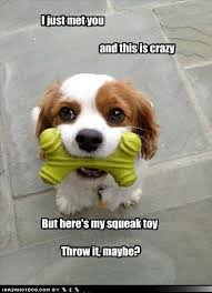 Cute Dog Memes - 67 best dog memes images on pinterest doggies puppies and funny