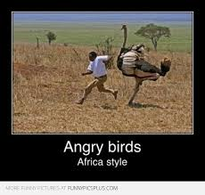 Angry Bird Meme - angry bird african style funny pictures