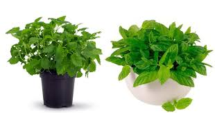 best plant for office best office plants for work productivity fact about plant