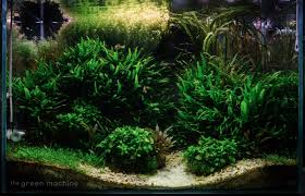 Aquascape Canada The Green Machine On Twitter